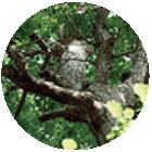 天然木の彩りイメージ